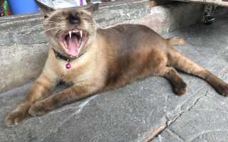 Почему кот скрипит зубами. Объяснения странных привычек кошек Кошка скребет окна зеркало стеклянные двери