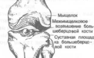 Переломы мыщелков бедренной кости. Надмыщелок бедренной кости латеральный Латеральный надмыщелок бедра