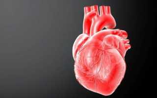 Как симпатическая нервная система влияет на сердце. Влияние симпатической и парасимпатической иннервации на функции организма. Роль парасимпатических нервных волокон