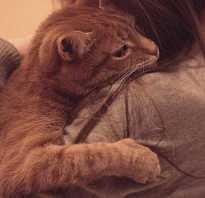 Как узнать как был убит кот. Смерть кота неестественная