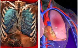 Особенности кровоснабжения органов человека. Кровоснабжение легких: назначение, функции, строение, характерные особенности кровеносных сосудов Кровоснабжение легких