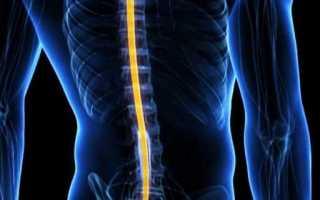 Характеристика спинного мозга и функции. Строение и функции спинного мозга. Для чего нужны проводящие пути СМ, их разновидности