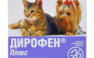 Глисты у кошки: симптомы, как узнать по признакам, лечение. Глисты у кошки: признаки заражения паразитами Как определить есть глисты у кота